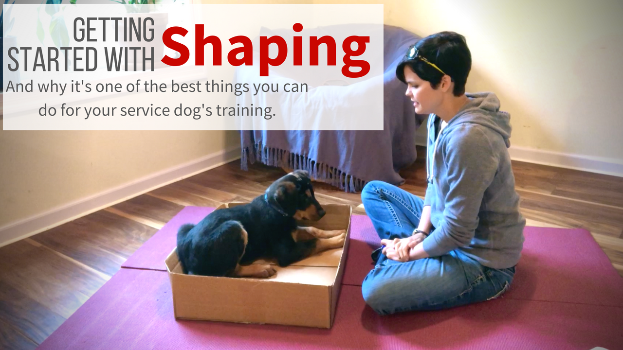 Intro to shaping and why it's one of the best things you can do for your service dog's training.