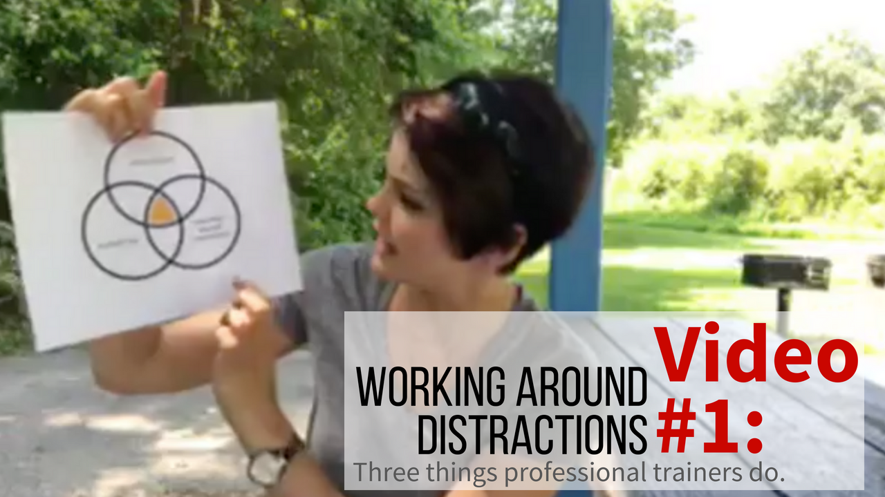 Three things professional trainers do to teach their dogs to work around distractions.