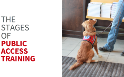 The stages of public access training and how to know when your dog is ready